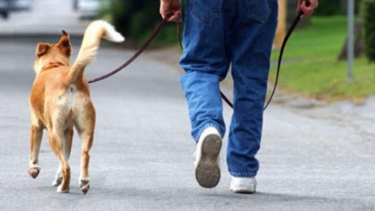 Weenect dogs 2 per cani, il localizzatore più piccolo