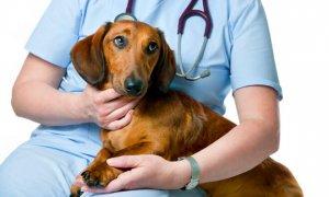 Scopri gli antinfiammatorio per cani