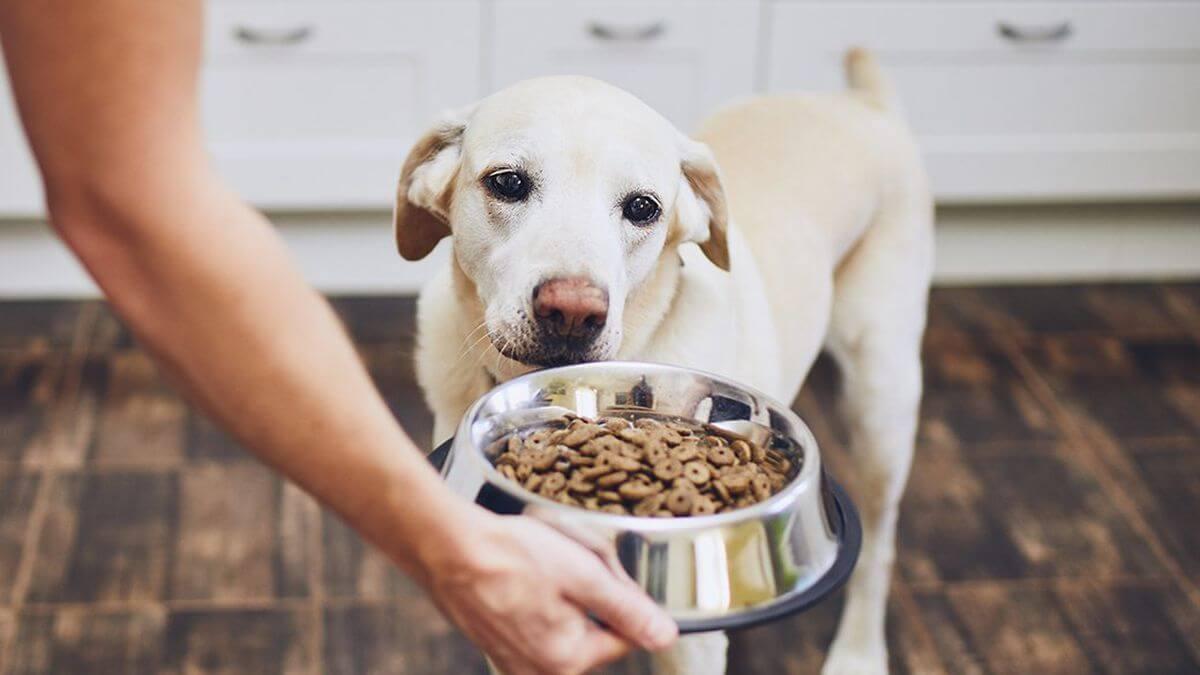 Monge il migior mangime per cani