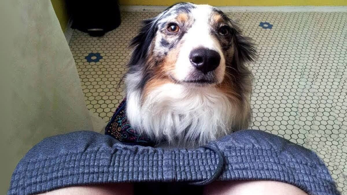 Ecco il motivo Il mio cane mi segue ovunque in casa