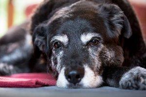 Le vitamine per i cani anziani
