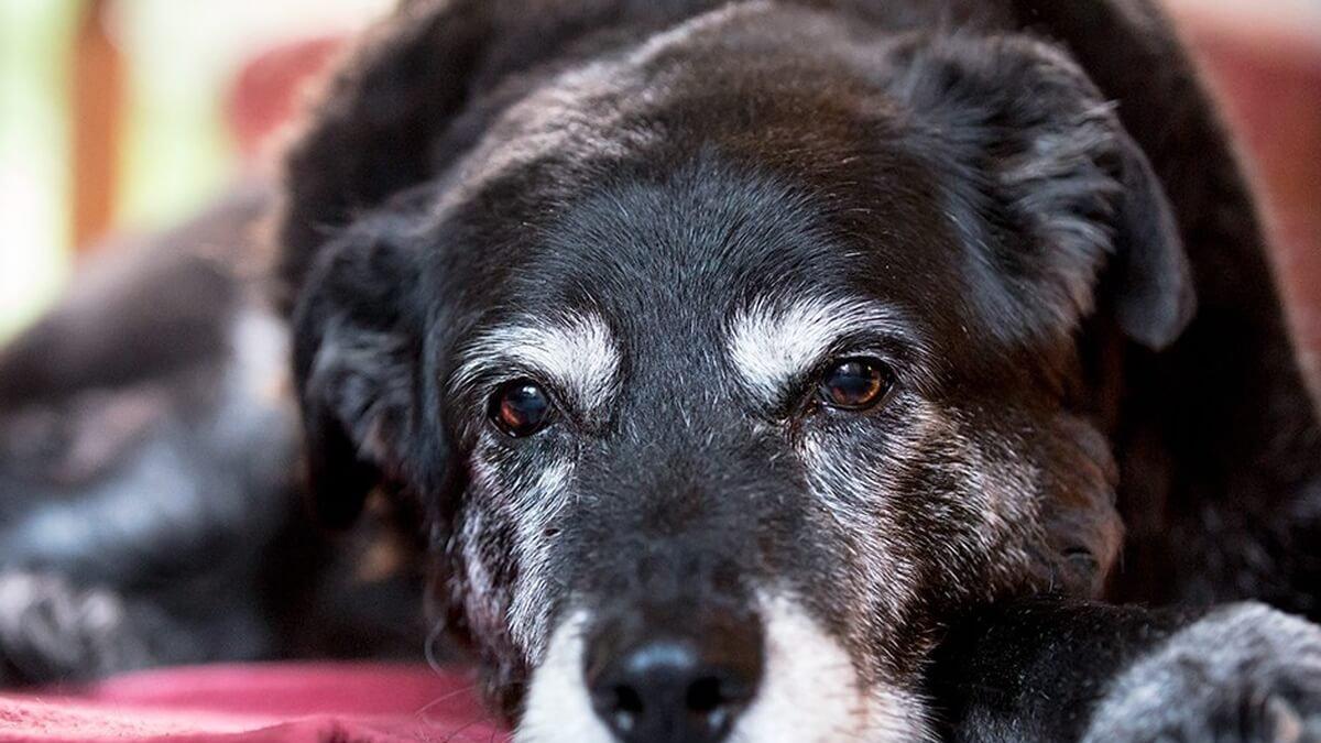 Vitamine per cani anziani