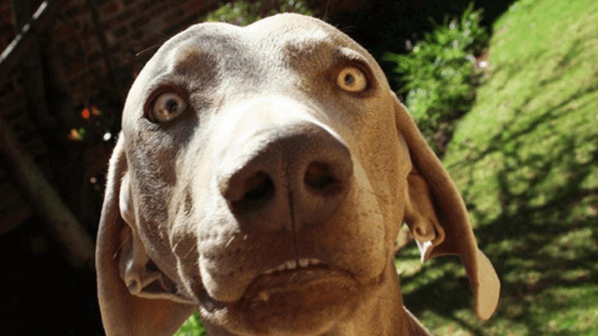 Coprofagia canina, cos'è?
