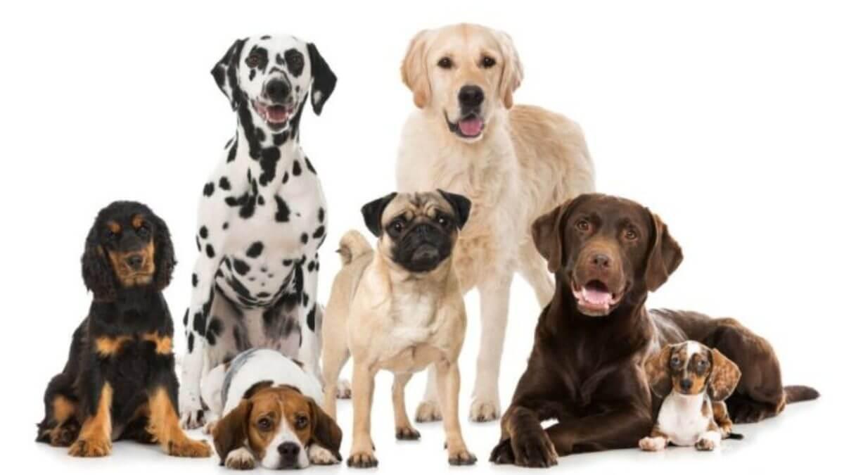 la etologia canina