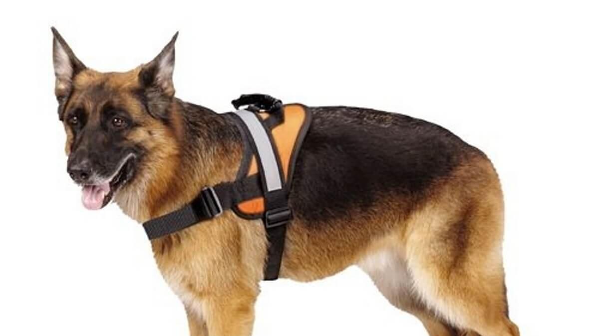 Pettorina cane, anti tiro. Come e quando usarle.