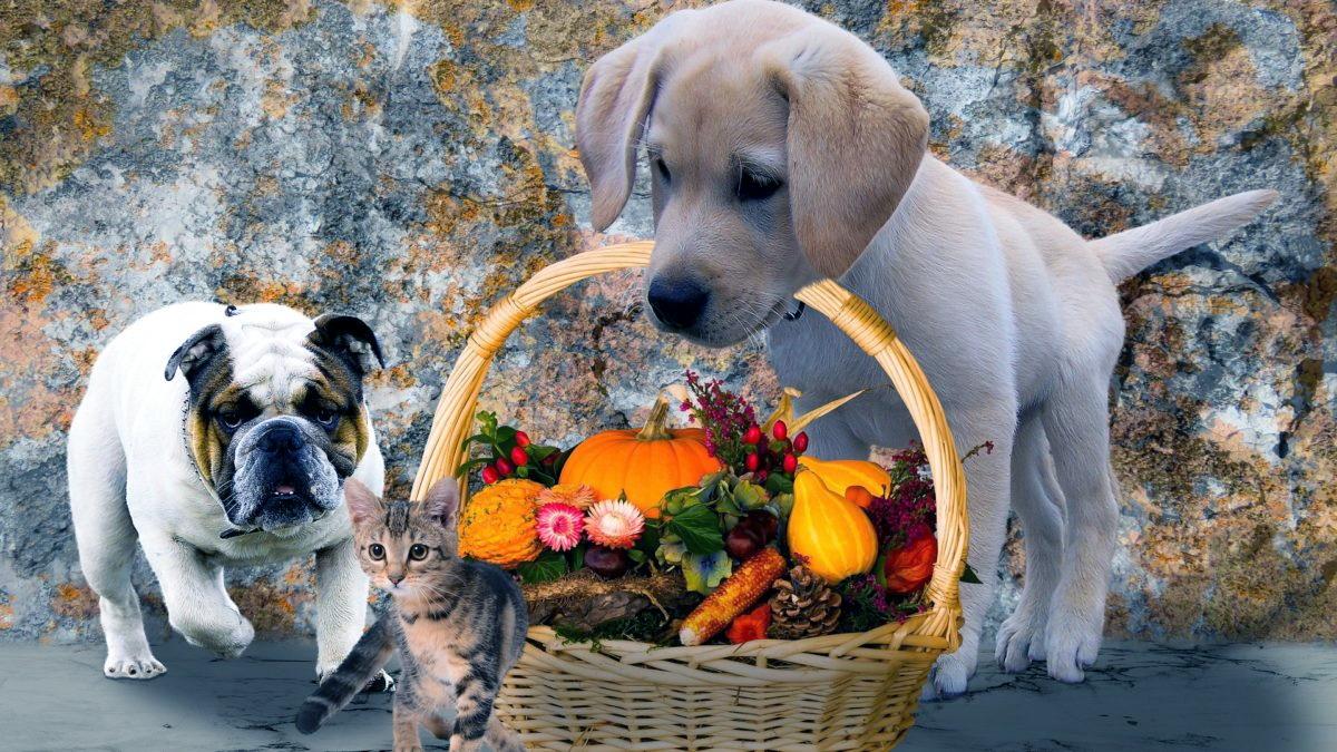 Farmina vet life, ottimo cibo curativo per cani