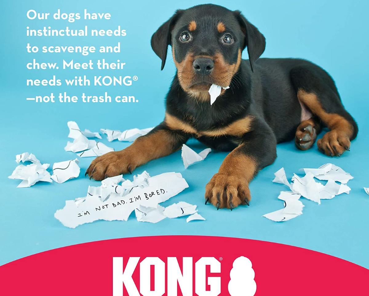 Scopri il kong per cani