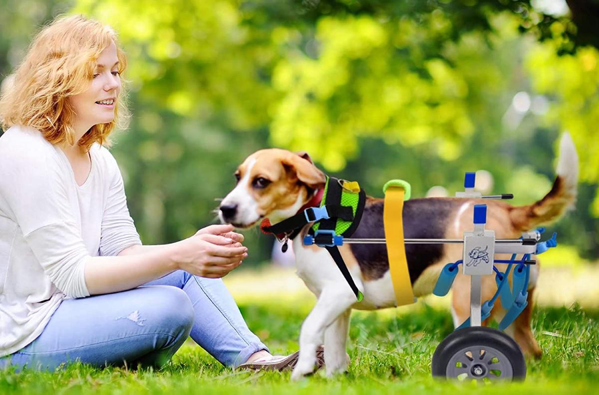 Carrellini per cani disabili, scopri il più adatto