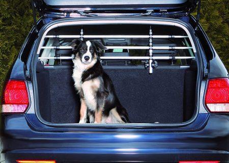 Scopri il divisorio auto per cani