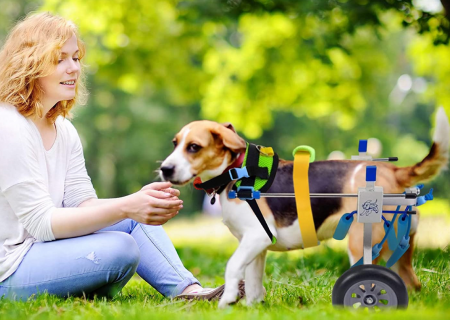 I migliori carrellini per cani disabili